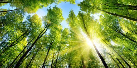 Diese Nachhaltigkeitsfonds Nutzen Investoren für die Portfolios der Anleger