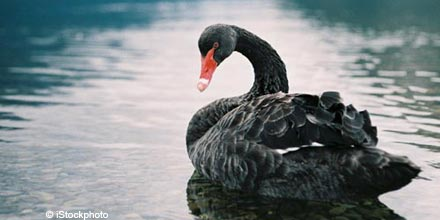 Is M&A collapse the black swan on the horizon?