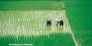 Vietnamese equity set to double by 2013 says Asia manager