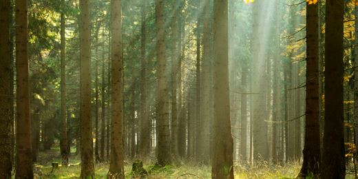How forests help pension funds shelter from market storms