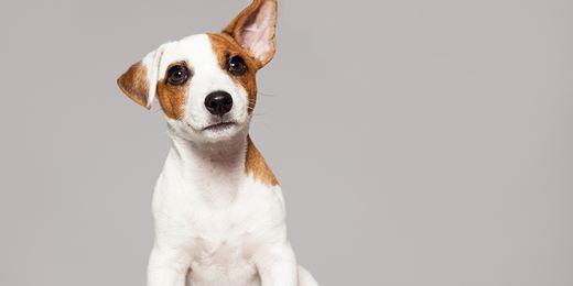Invesco 'top dog' as Bestinvest collars Barnett funds