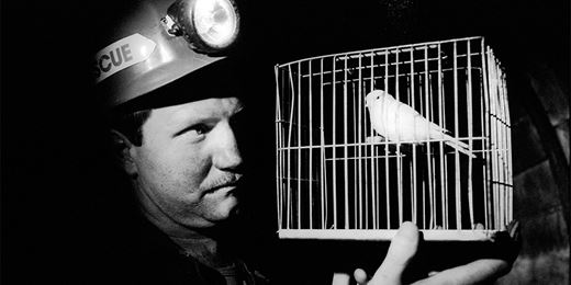The next canary in the coal mine