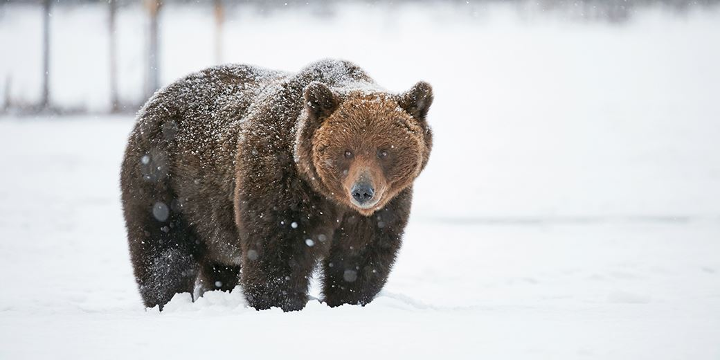 Turkey tips emerging markets into bear territory